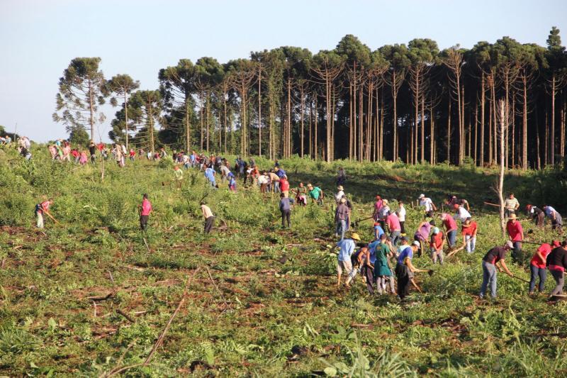 MST que plantar alimentos onde Araupel planta eucaliptos - Foto MST